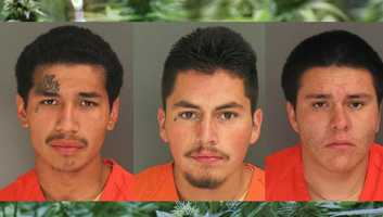 Watsonville teenagers Edgar Alfaro, Gerardo Patricio, and Bejarmen Sanchez, went on a pot shop burglary spree May 13 across Santa Cruz County, deputies said. The teens smashed through the front windows of Green Acres on Portola Drive in Live Oak, Santa Cruz Mountain Naturals Dispensary on Soquel Drive in Aptos, East Coast Evolution in Felton, Redwood Coast Collective in Ben Lomond, and a fifth shop, according to investigators.