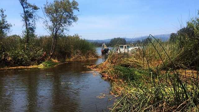 City uses Aquamog to remove Pinto Lake Island