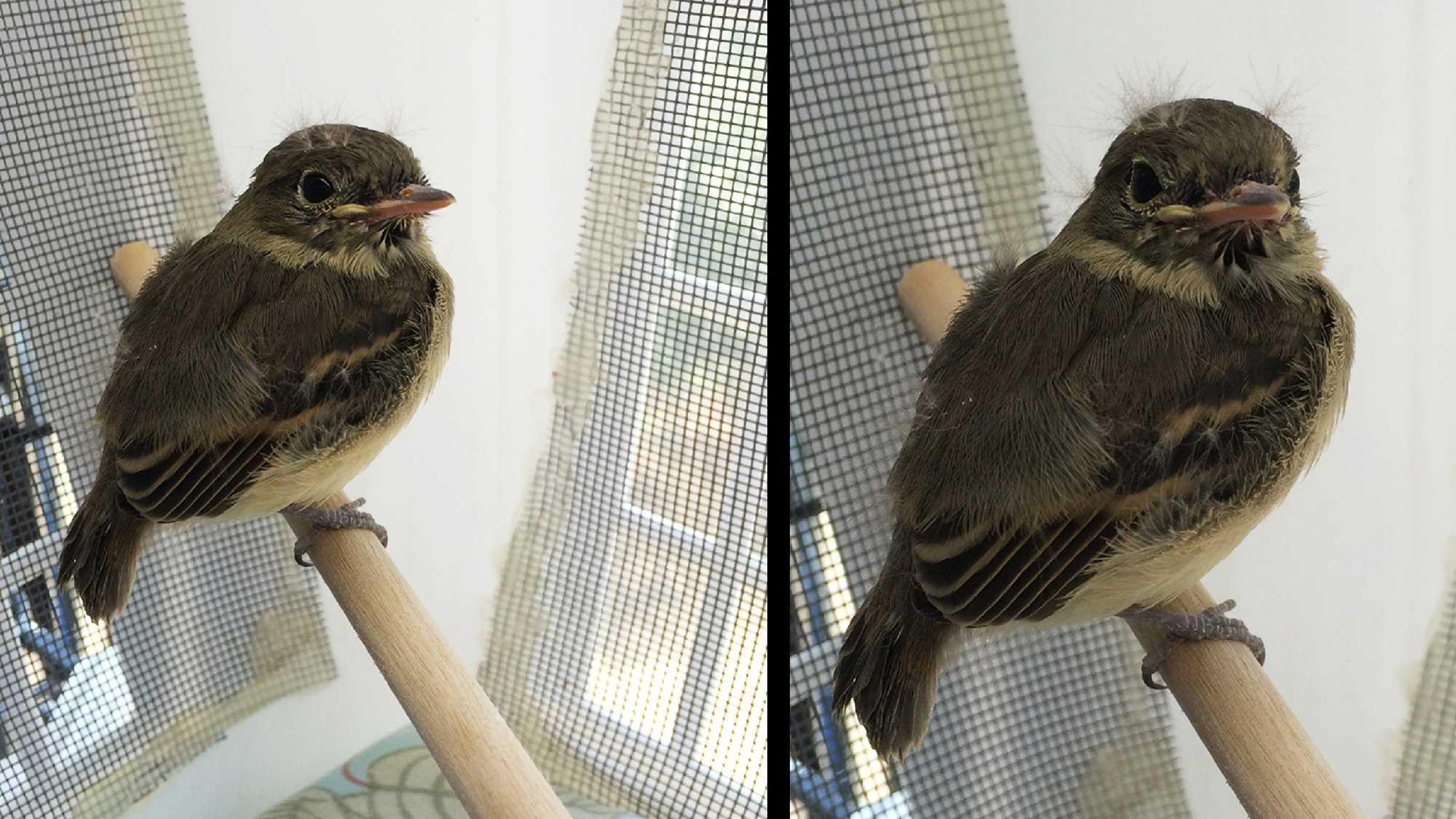 Rescued baby bird
