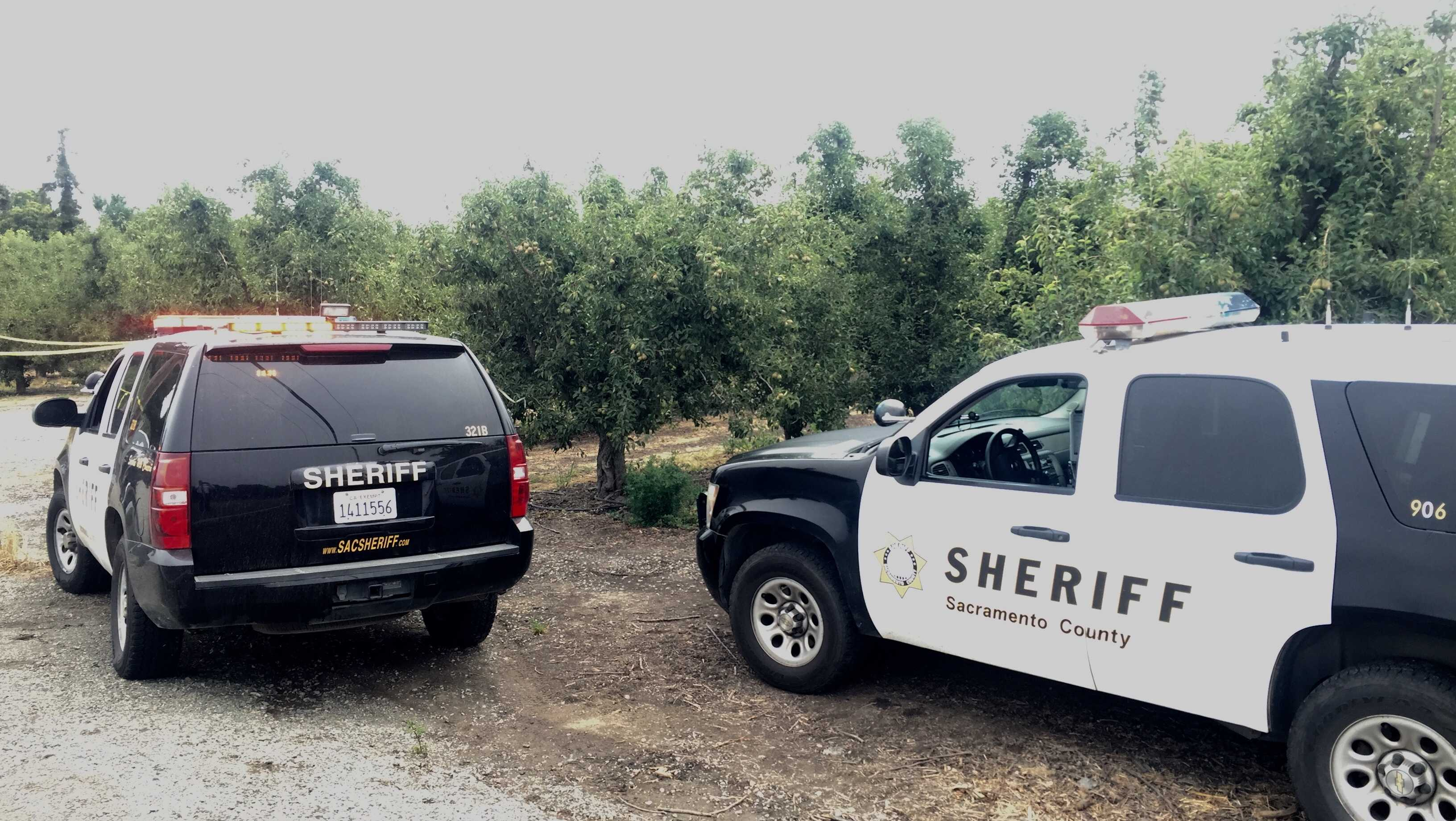 Deputies investigate a deadly shooting after a victim was found Thursday, June 8, 2017, in a Sacramento County orchard, the Sacramento County Sheriff's Department said.