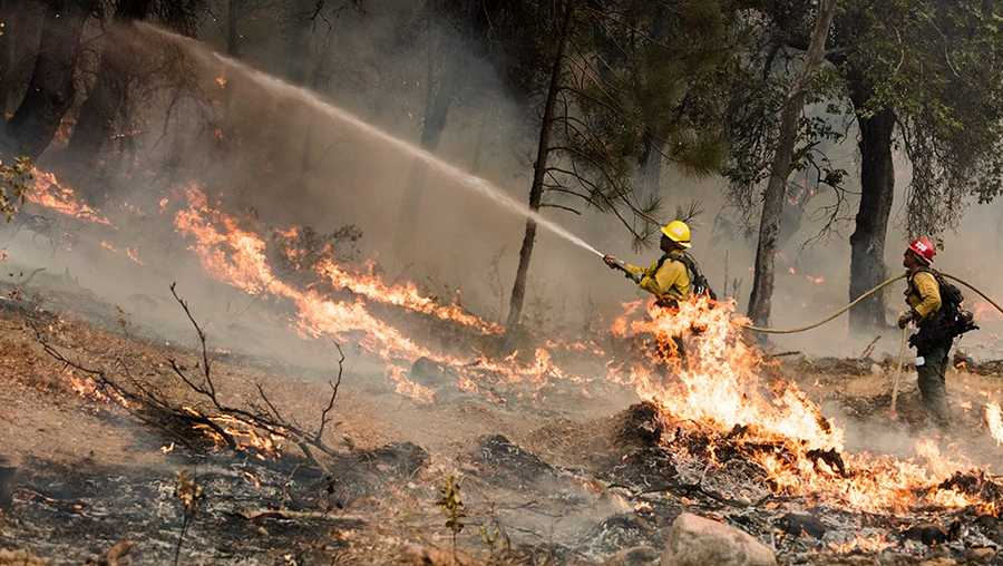 Fire fighters spray down trees close to the control line north of Arroyo Seco.