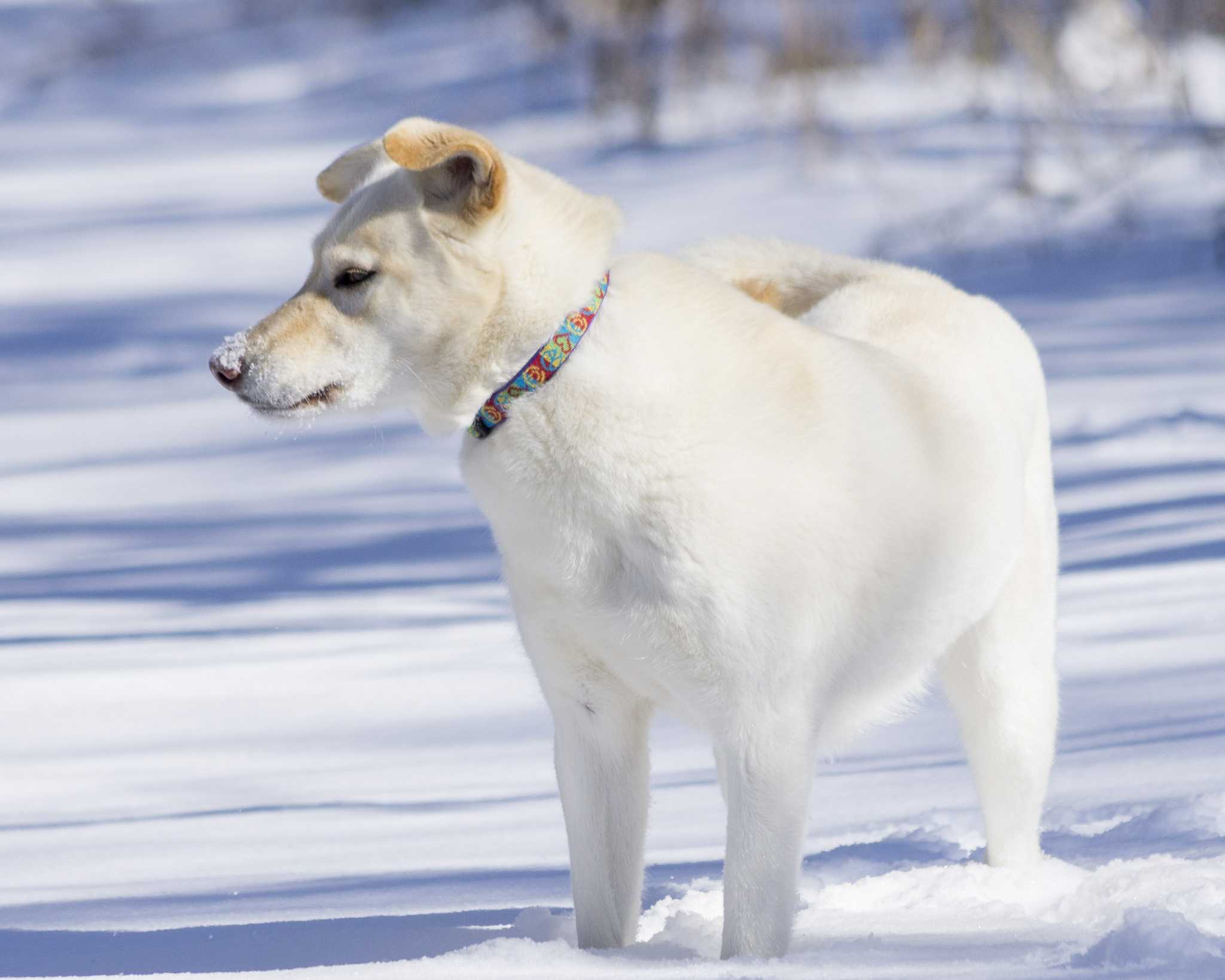 Tips for keeping your pet warm and safe during cold weather