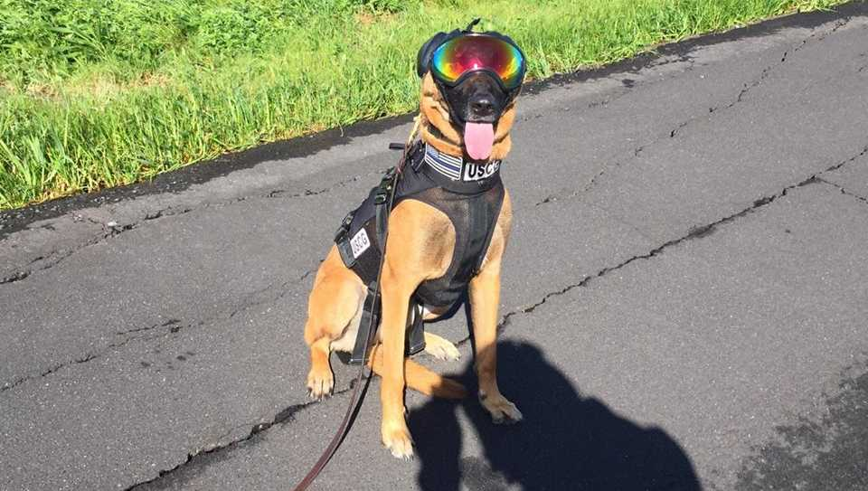U.S. Coast Guard K9s wearing goggles and ear muffs when they train with the California Highway Patrol.