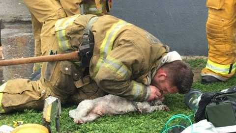 A dog's life was saved after firefighters spent 20 minutes trying to resuscitate the pet who was found in a burning apartment building on Tuesday, March 21, 2017, the Santa Monica Fire Department said.