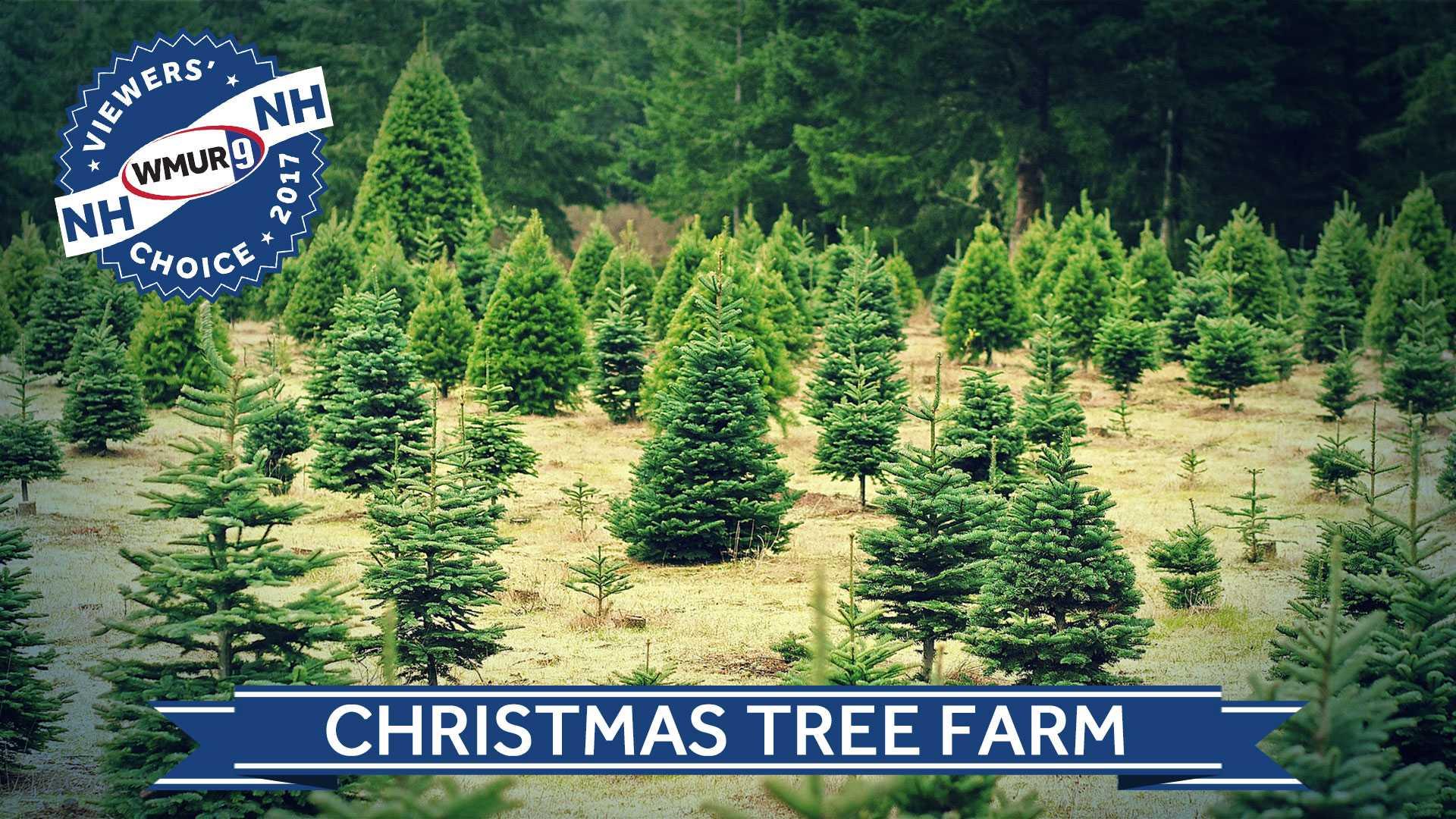 Viewers' Choice Christmas tree farm