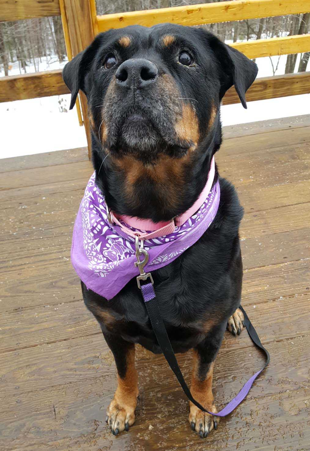 Abby is an adoptable dog at For the Love of Dog in the Keene area.