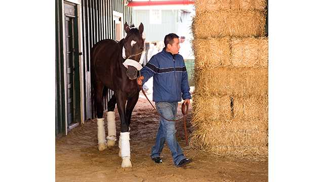 Always Dreaming arrives at Pimlico