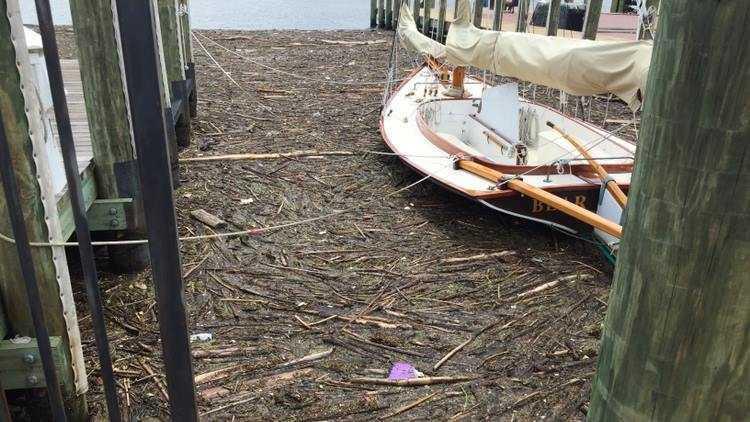 Annapolis City Dock storm debris