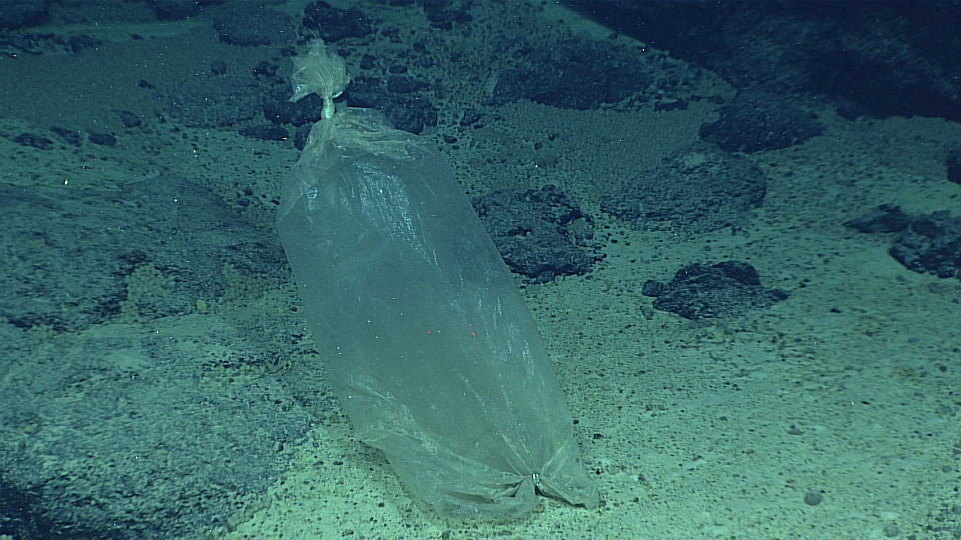 This April 22, 2016 image made available by NOAA shows a plastic ice bag found at the Enigma Seamount, during a deepwater exploration of the Marianas Trench Marine National Monument area in the Pacific Ocean near Guam and Saipan. Dives in the expedition ranged from 820 feet to 3.7 miles.