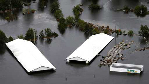 At least 3.4 million chickens, turkeys die in Florence flooding