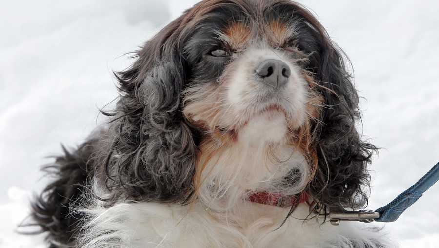 Winter pet safety tips keep your animals happy and healthy when the temperature drops - Keeping outdoor dog happy winter ...