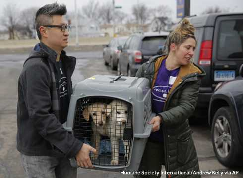 46 dogs, saved from slaughter in South Korea, arrive at Kennedy Airport