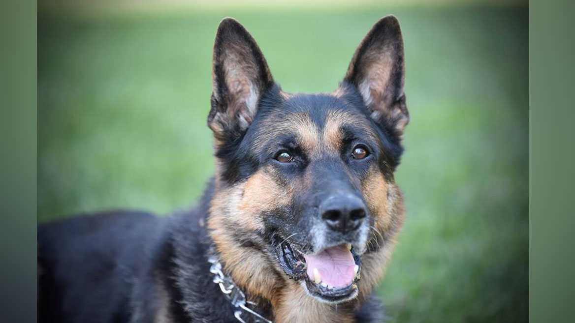 Roseville police K-9 dies unexpectedly
