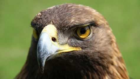 Auburn-nova-eagle-jpg-1498502902.jpg?crop=1.00xw:0.844xh;0,0