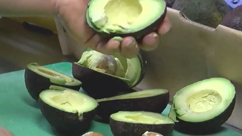 Engagement Rings Inside Avocados Is A Thing Now. Rock And Roll Engagement Rings. Indiana Wedding Wedding Rings. Amber Stone Wedding Rings. Same Wedding Rings