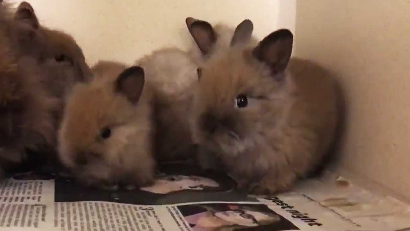 bunnies rescued