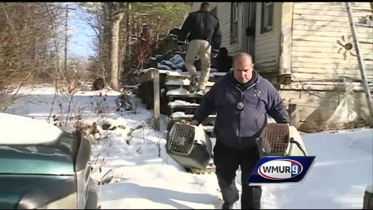 Cats removed from Barnstead home