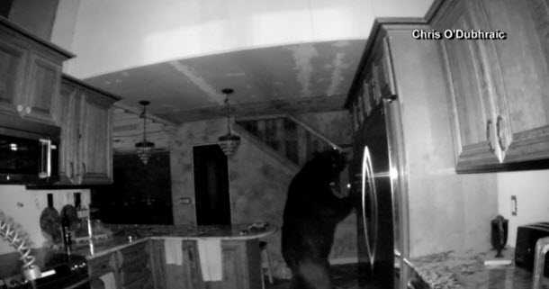 Bear raids Colo. fridge while owner sleeps