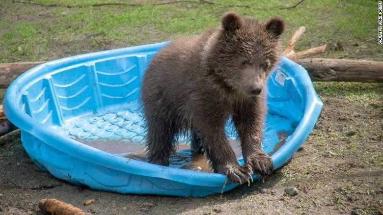 No worries for this orphaned baby bear