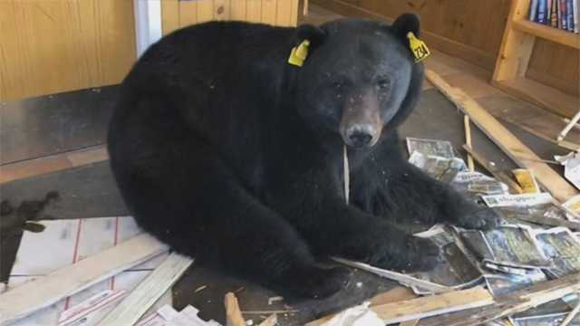 Bear makes its way into post office in Colorado mountain town
