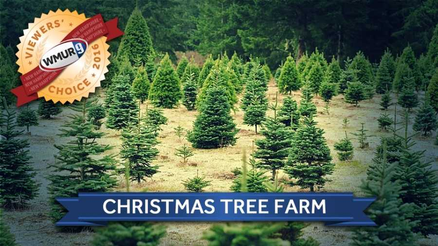 Christmas Trees Nh