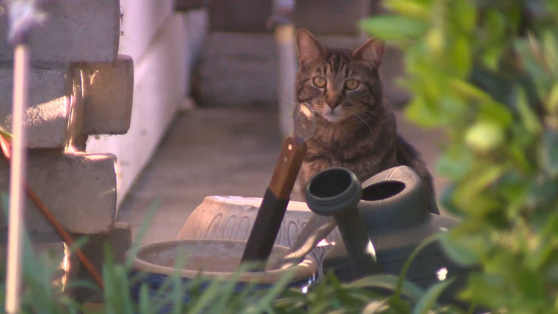 Woman accuses neighbors of trapping cats