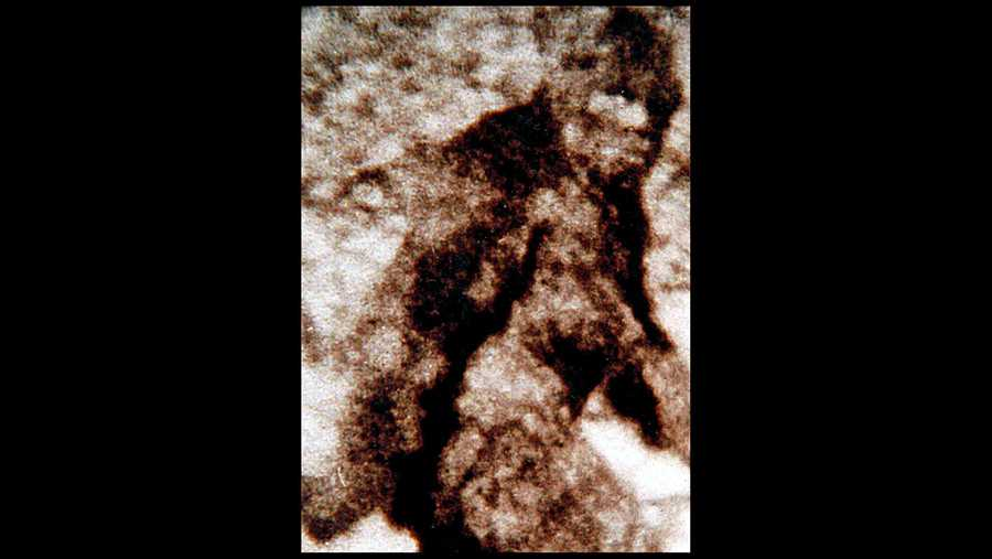 Hunters offering incredible $1 million for tips leading to capture of Bigfoot