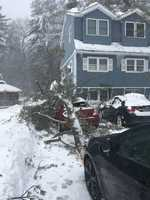 Billerica tree down