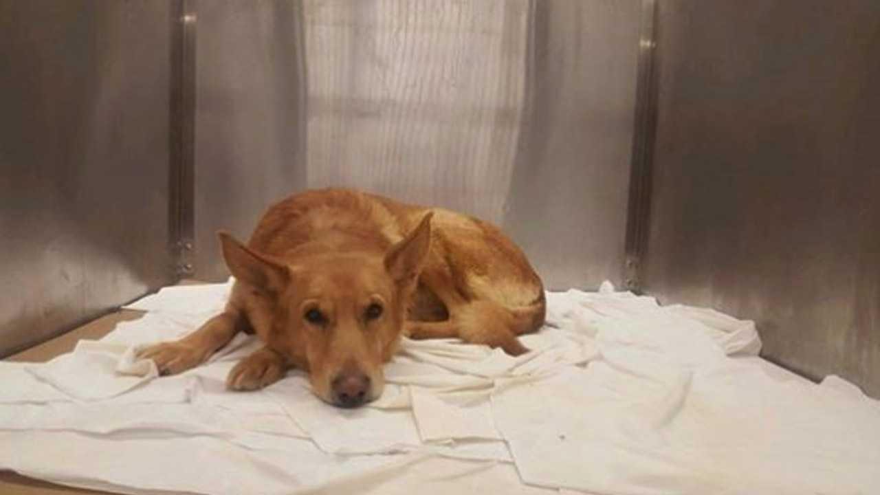 Racine County dog has 'sex change' to save his life