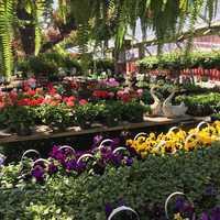 Black Forest Nursery & Garden in Boscawen