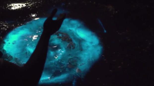 Amazing bioluminescence creates glowing blue water - photo#28