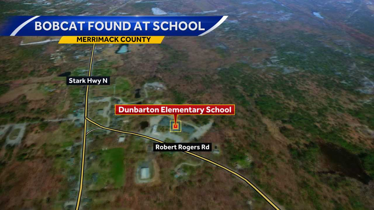 Bobcat found at Dunbarton school
