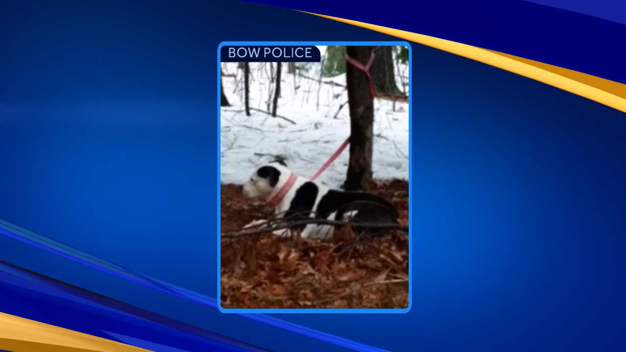 Dog found tied to tree in Bow