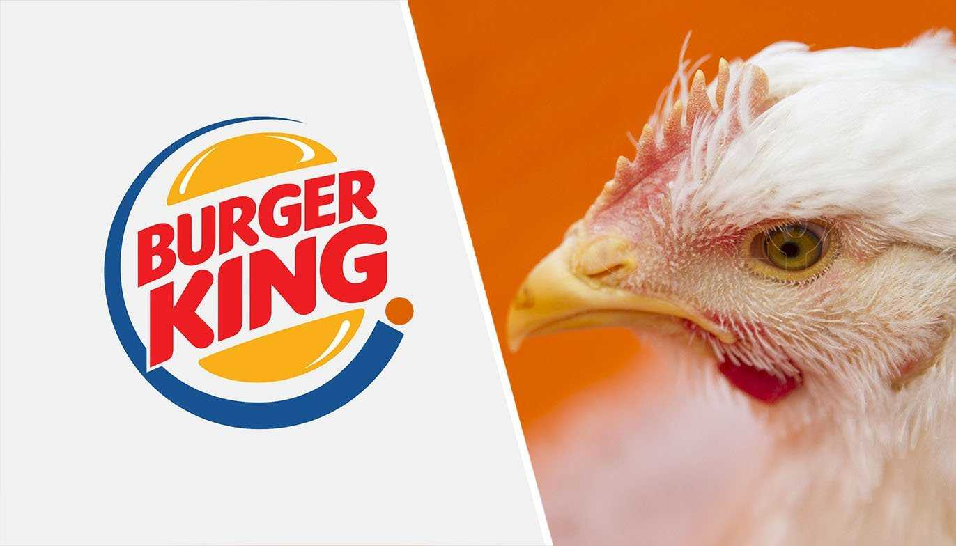 Burger King to stop serving chickens which have been 'abused'
