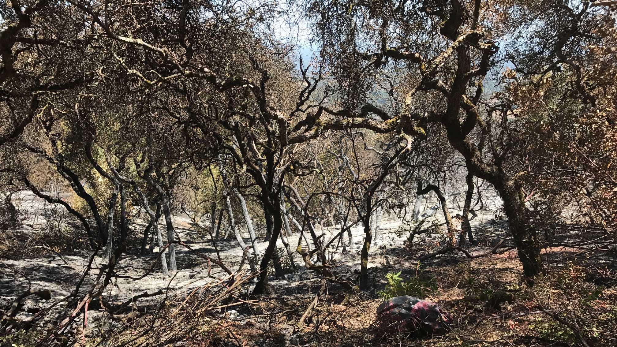 Eden Fire in Saratoga