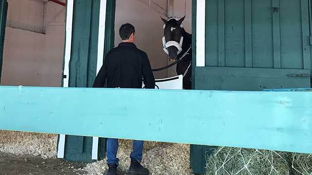 Always Dreaming takes residence in Stall 40 at the Pimlico Stakes Barn