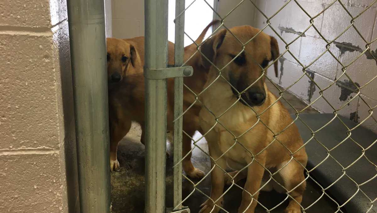 Endangered dogs at the Fayette Animal Shelter have found a new home.