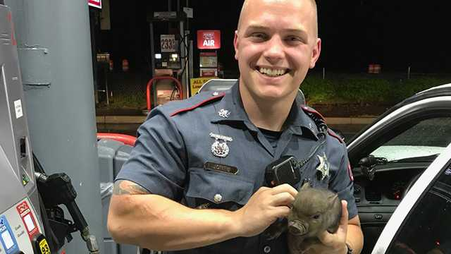 Deputy Chris Jones rescues pig