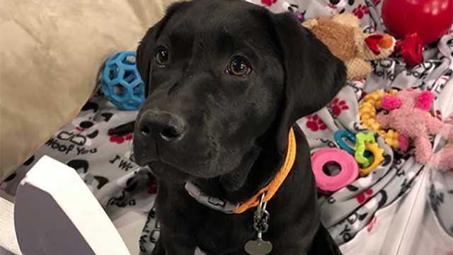 Camden, WBAL-TV's Puppy with a Purpose