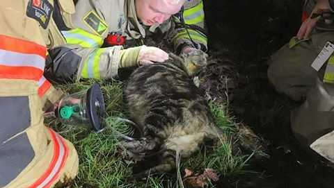 Firefighters Rescue Cat From Fire