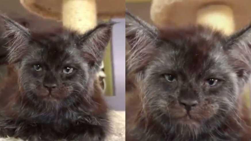human cat face cat