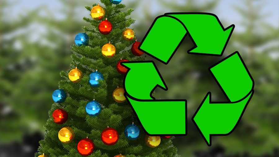Recycling programs offer easy ways to dispose of Christmas trees