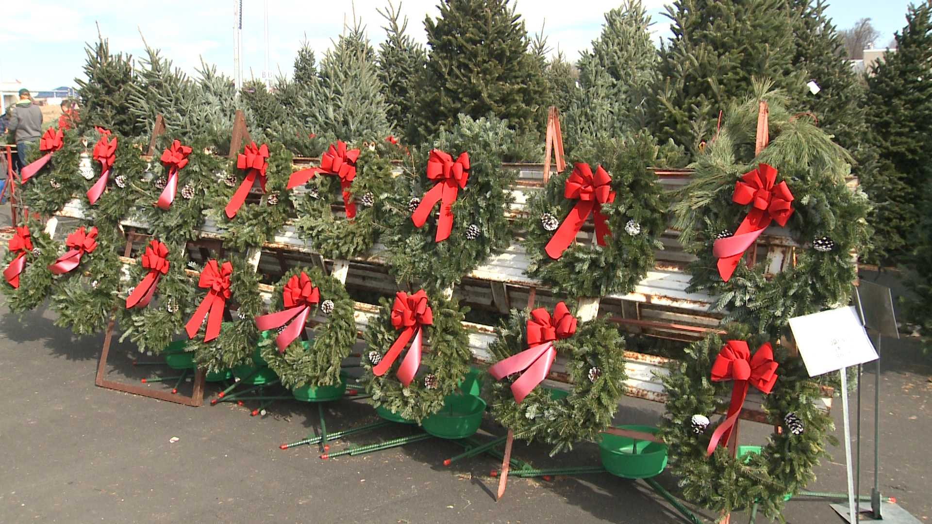 Nationwide shortage on Christmas trees