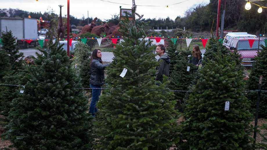 A Christmas tree shortage could mean higher prices at tree lots this winter, according to the National Christmas Tree Association.