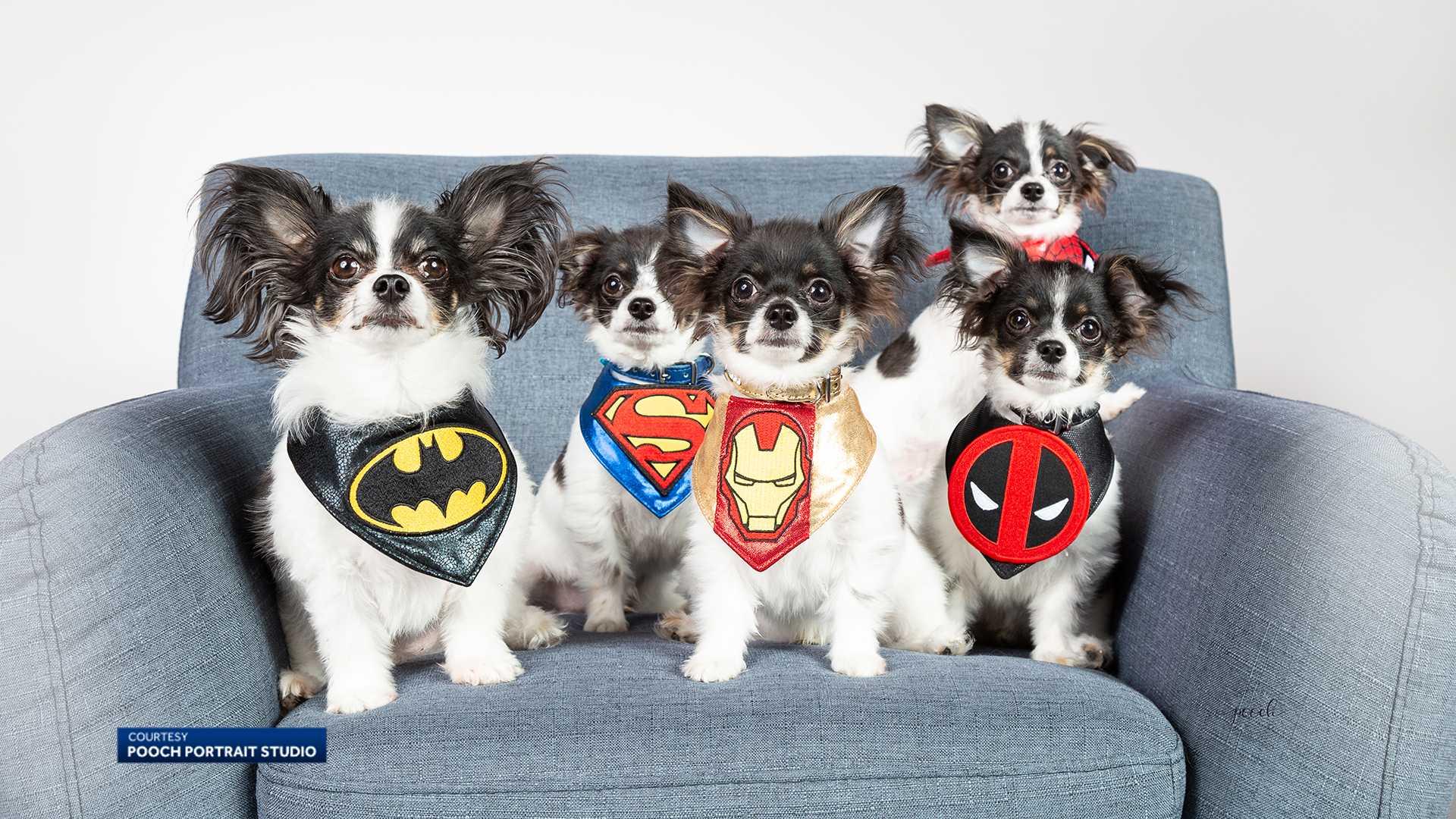 Meesha Kauffman's cloned dogs