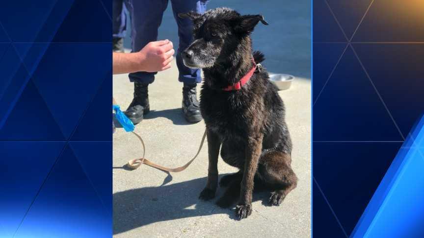Coast Guard crews rescue a dog found swimming in Lake Pontchartrain