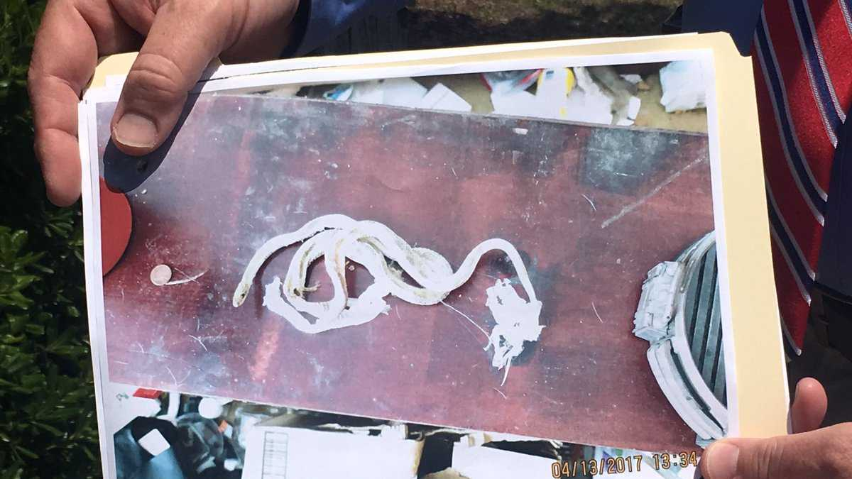 Dead reptiles found in soldier's home