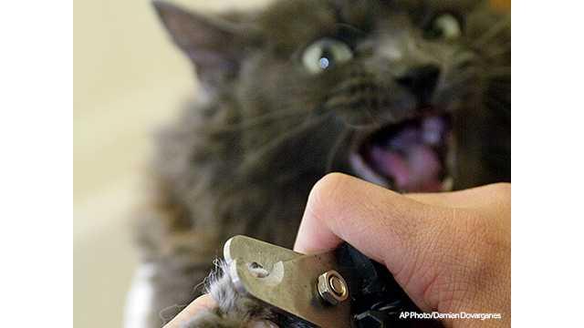 declawing cat