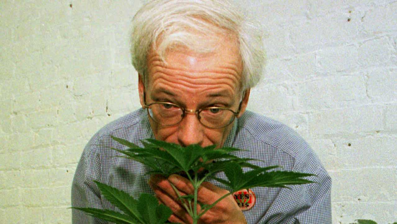 In this Jan. 14, 1997 file photo, Dennis Peron, founder of the Cannabis Cultivators Club, smells a northern lights marijuana plant in the club's growing room in San Francisco.