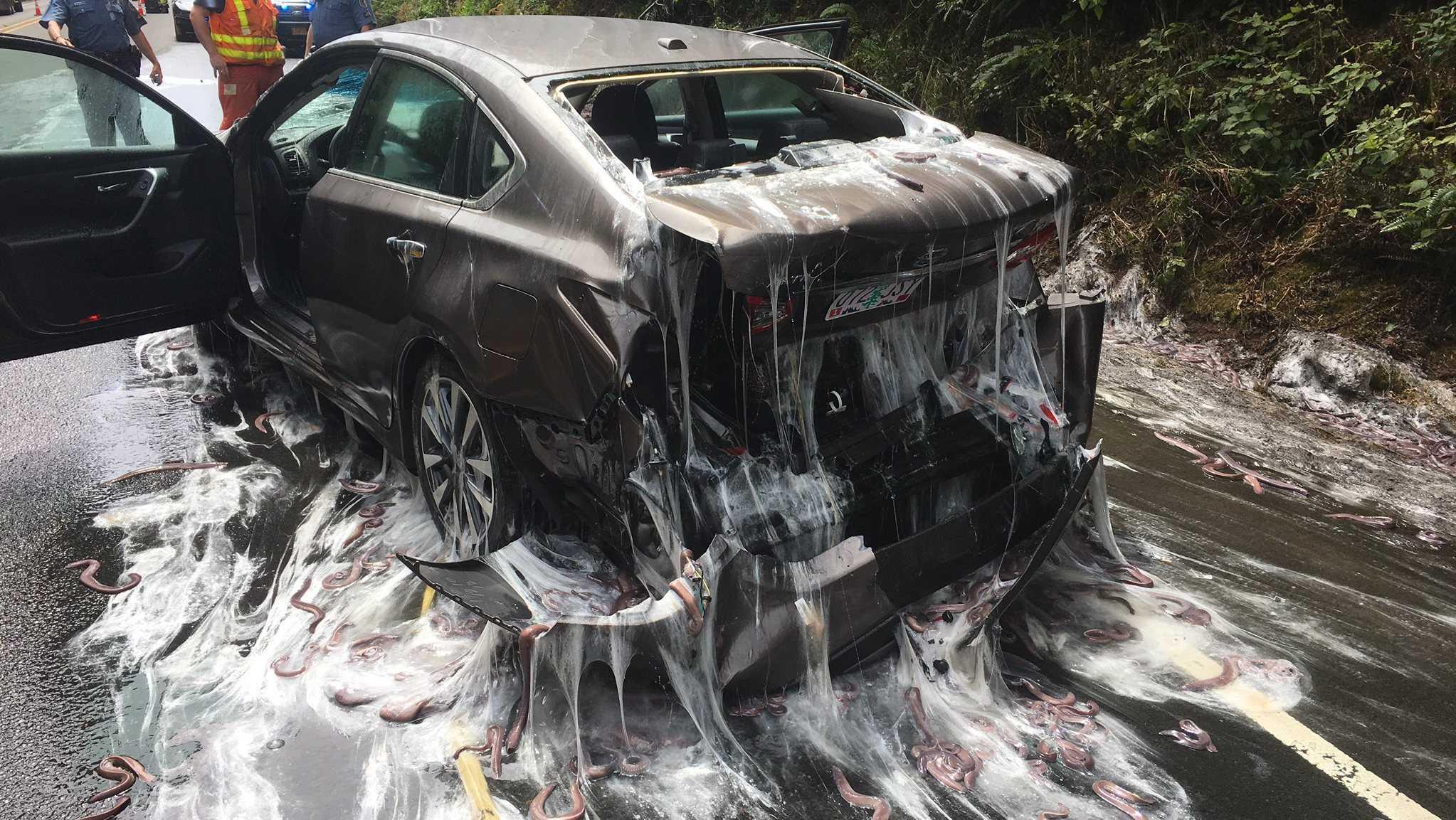 Drivers Get Slimed by Eels in Oregon